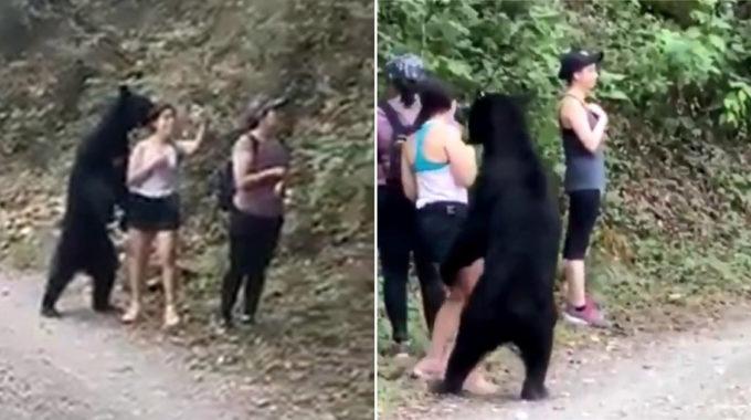 """México coloca trampas para osos amigos que posaron para """"selfies"""""""