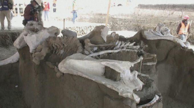 La construcción del aeropuerto en México descubre más de 100 esqueletos de mamut