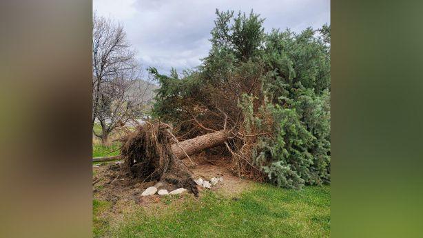 Advertencia de congelamiento fuerte esta noche en efecto en partes de Utah después de un día de fuertes vientos