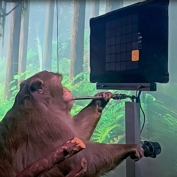 Observa a un mono equipado con el dispositivo Neuralink de Elon Musk jugar Pong con su cerebro