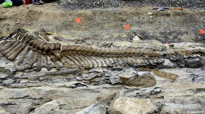 Especies de dinosaurios 'habladores' encontradas en México